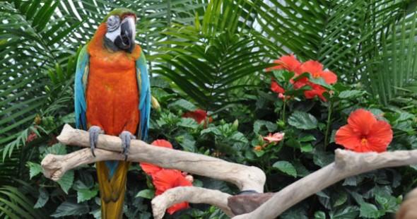 perroquets_en_folie