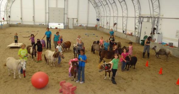 mini-chevaux_mirabel_3