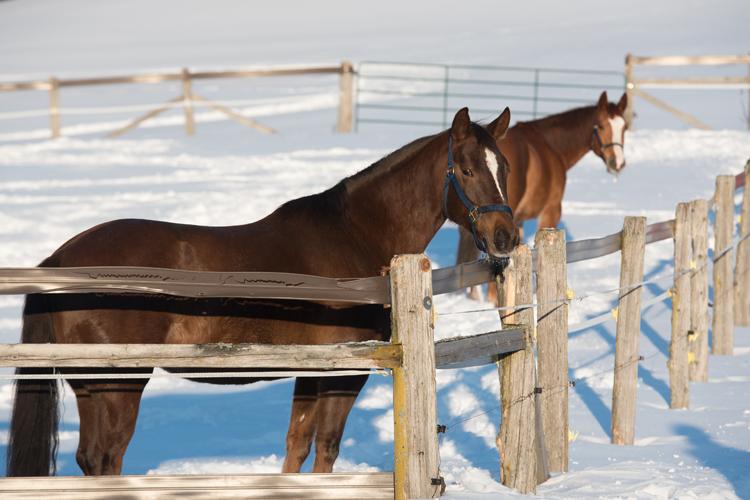 tourisme_laurentides_chevaux