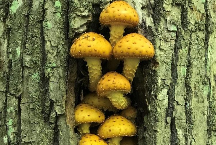 initiation au monde des champignons à Val-David