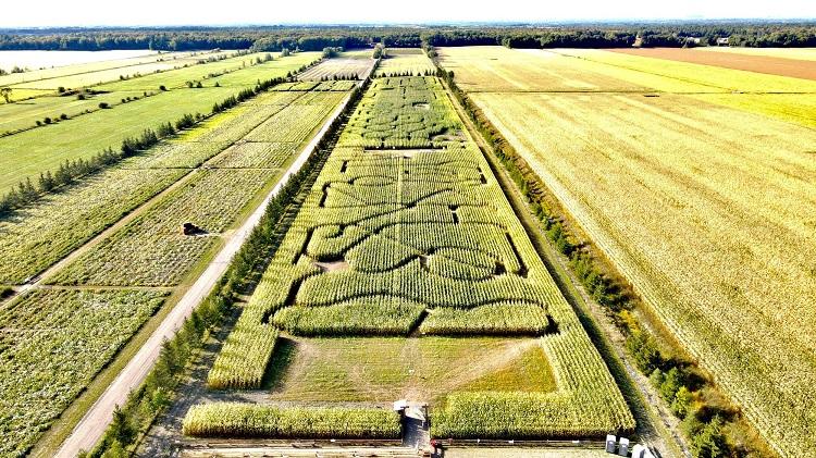 Grand labyrinthe de maïs