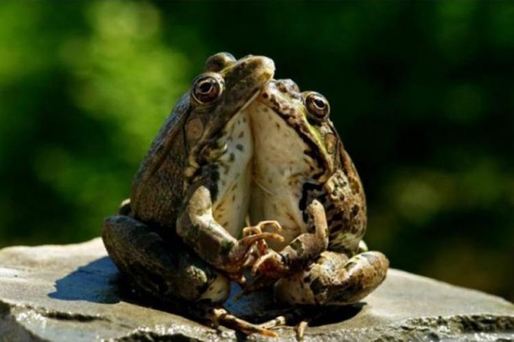 2_grenouilles